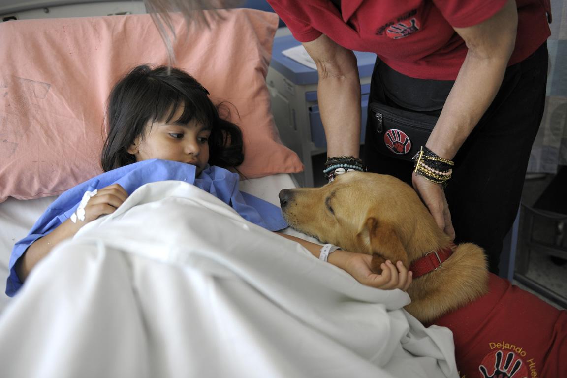 Proponen terapia con animales para personas internadas en el hospital rawson diario m vil san - Animales con personas apareandose ...