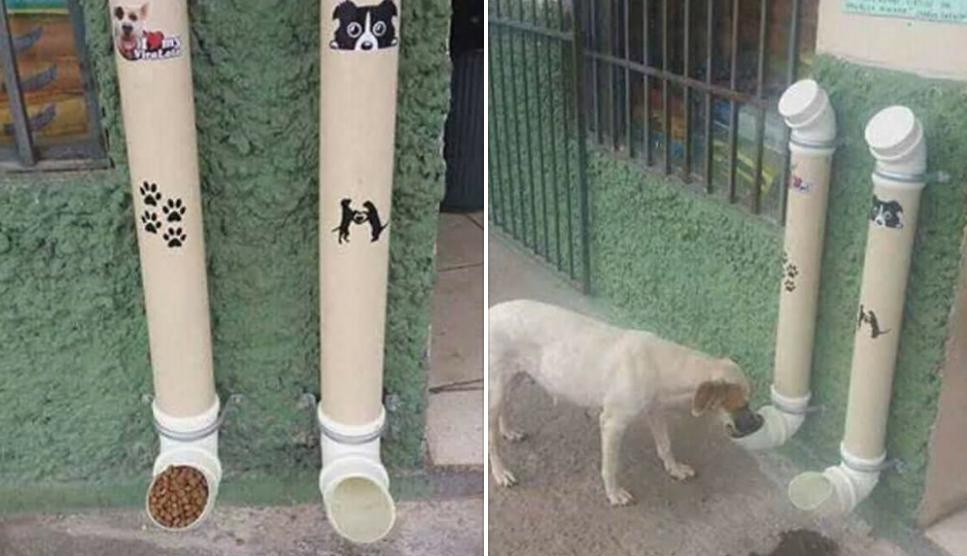 En san juan entregar n comederos y bebederos gratis para for Comederos para perros