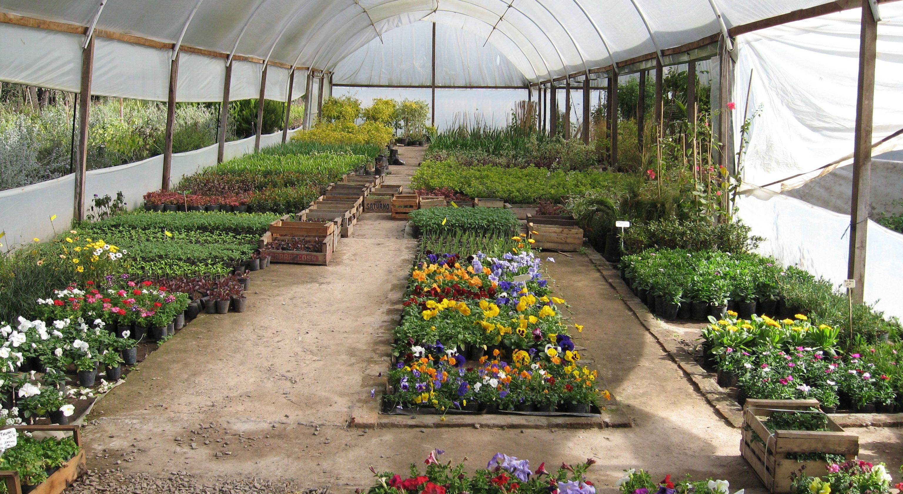 Plantas forestales y ornamentales en los viveros for Viveros ornamentales