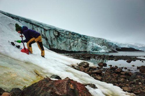Por el cambio climático, la Antártida se está tiñendo de verde ...